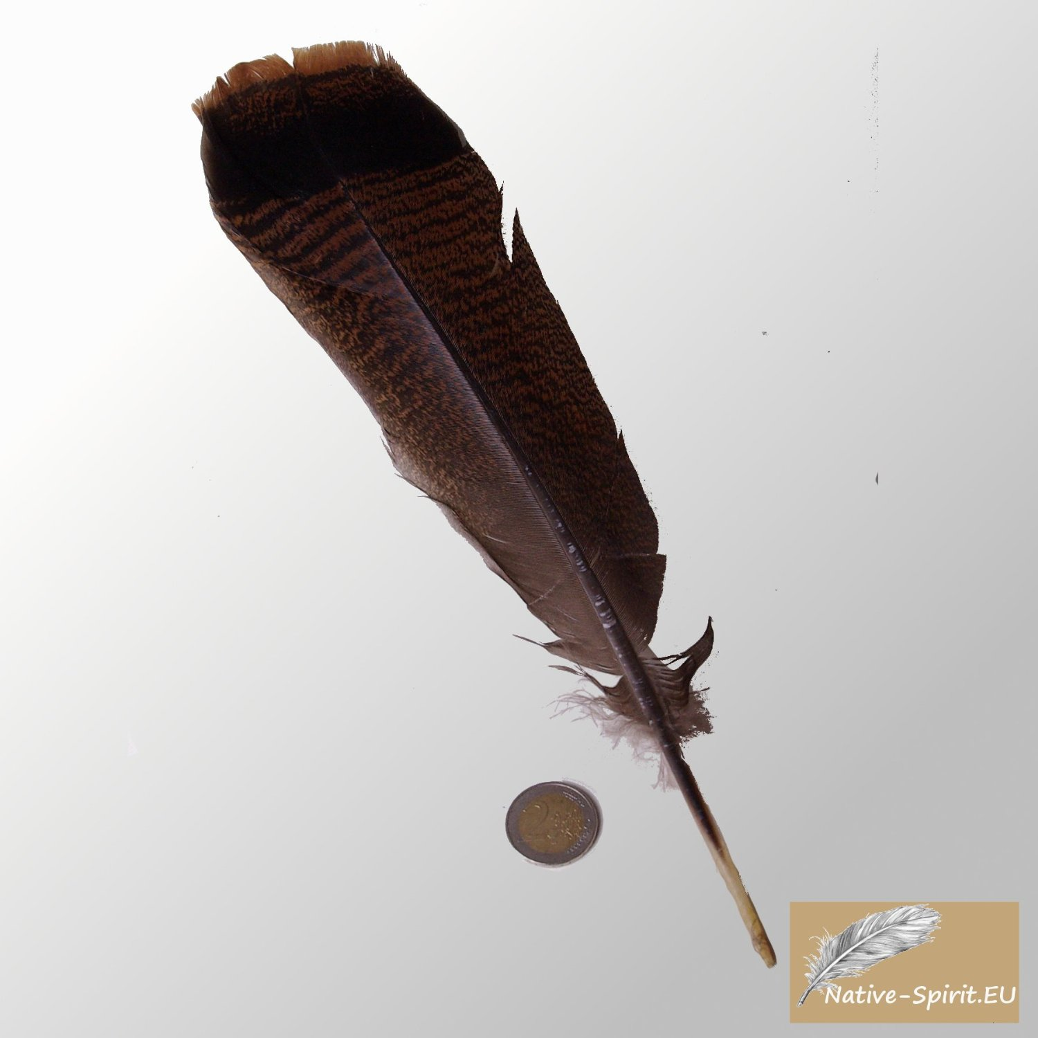 bronzene Truthahn Feder vom wilden Truthahn (wild turkey tail feather), mit natuerlicher huebscher s